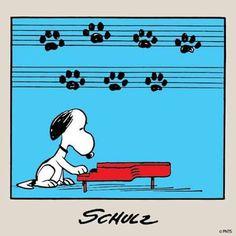 Musical de perros
