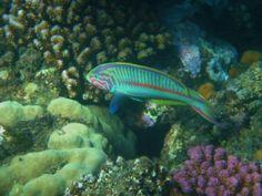 at the reefs in front of Three corners Fayrouz plaza, Port Ghalib, Egypt