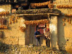 Yunnan, China - harvest
