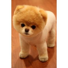Chronicle Books Blog » Blog Archive » Boo: The Cutest Dog in the World found on Polyvore