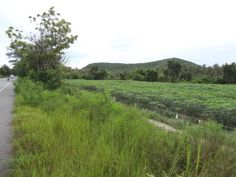 Thailand Real Estate Cha-am Land For Sale -- 12 Rai (1.92 Hectares) -- Chanote Title Deed -- 170 M Paved Road Frontage -- All Utilities on Site -- Three Phase Electric Price:  5.88 Million THB - Tax Included