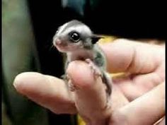 Descubre a los animales más pequeños del mundo
