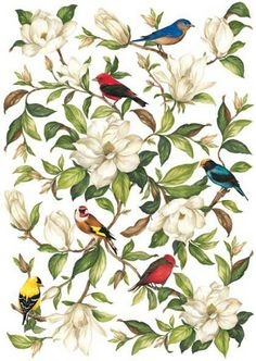 Calambour Paper for classic Decoupage. Pattern : magnolia and red, yellow, black, orange and blue birds standing on small branches with white background. Details: measures 50 x 70 cm, printing on 80 gr/mq paper sheet CAL 279 Decoupage Vintage, Vintage Diy, Vintage Ephemera, Vintage Paper, Botanical Illustration, Botanical Prints, Illustration Art, Floral Prints, Illustrations