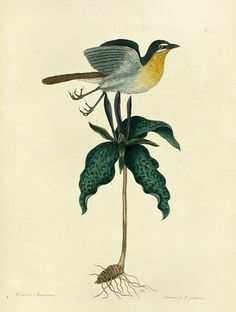 1194km: John James Audubon.