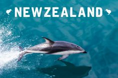 Take yourself to the edge of the world, New Zealand Incentive. #newzealand #incentives #mannatechaustralasia #mannatravel