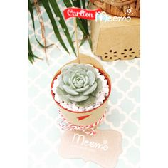Amazing party favor Succulents by Meemo Party Accessories, Party Favors, Succulents, Birthday Parties, Crafty, Amazing, Creative, Colors, Anniversary Parties