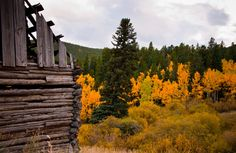 Some of the Fall color is beginning to turn orange beside this old mining cabin.
