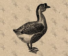 Vintage image Goose Instant Download Digital printable Antique picture Retro drawing B&W clipart graphic prints, burlap, decor etc HQ 300dpi by UnoPrint on Etsy #hq #png #bw #Ephemera #diy #old #book #illustration #gravure #inspiration #retro #antique #vintage #300dpi #craft #draw #drawing  #black #white #printable #crafts #transfer #decor #hand #digital #collage #scrapbooking #quality