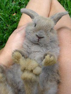 Bunnies, I love their little fuzzy feet!