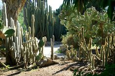 JOELIX.com | Botanical garden in Valencia Spain