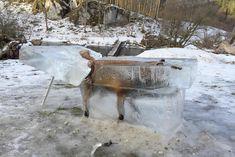 Bild zu Fuchs, eingefroren., Donau