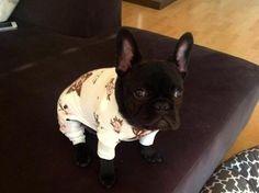 パジャマ犬