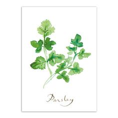 PARSLEY print, Herbs, Country Kitchen wall decor watercolor painting... ❤ liked on Polyvore featuring home, home decor, wall art, green painting, vertical wall art, giclee painting, signed poster and green home decor