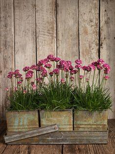 Kesäkotiin - Summer Home   Ellos               Finnish Design Shop                 Kukkia - Flowers                     Kuvat Pinterest ...