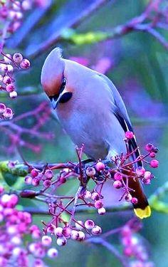 Beautiful Creatures, Animals Beautiful, Cute Animals, Cute Birds, Pretty Birds, Exotic Birds, Colorful Birds, Most Beautiful Birds, Beautiful Beautiful