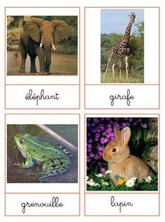 Free printables for matching Montessori Materials, Montessori Activities, Activities For Kids, French Cursive, Rare Albino Animals, Fun Facts About Animals, Alternative Education, Pet Day, Cards
