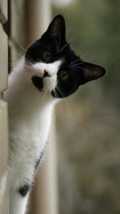 I love tuxedo cats..ours mostly white + flfufy