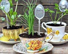 Garden Tea Party Great Thank you gifts?? Dollar Store Tea cups or Tea cups from a second hand store and then Herbs separated into smaller chunks and replanted!!