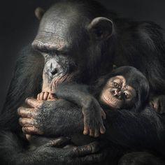 Foto Animali come persone: i ritratti che emozionano - 1 di 14 - Repubblica.it