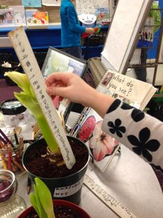 Wonders in kindergarten plants/gardens study. Healthy Meals For Two, Healthy Baking, Math Measurement, Plant Science, Healthy Cat Treats, Recipe From Scratch, Diet Food List, Education Quotes For Teachers, Kindergarten Math