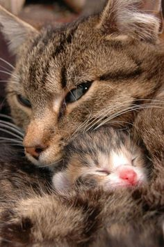 Mama and baby, awww…