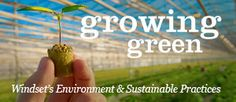 Windset Farms: Growing Green