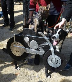 Dogs of Anarchy #dog #halloween #costume