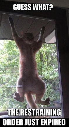 Funny Cat Restraining Order Cat Meme