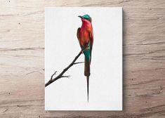 """""""PipSqueek"""" Bee Eater Bird Canvas Painting"""