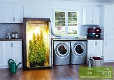 Never buy Marijuana again. You can grow it discreetly at home, even if you're not a great gardener. Marijuana is a strong plant and easy to grow. It literally grows like a weed. You can set up a discreet box in your home and grow your own. You can also get rid of the smell so your neighbors don't notice. This website will teach you how to do this.