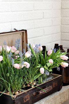 Flowers in vintage suitcase