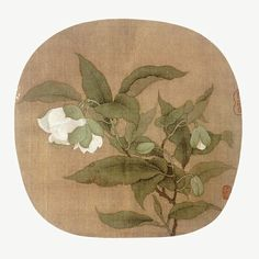 Magnolia coco(lour.)DC. chinese silk painting the song dynasty P.S can't input Italics Latin on this mobile phone╮(╯_╰)╭