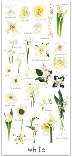 272 Best Wedding Flower Names Images Beautiful Flowers Gardening