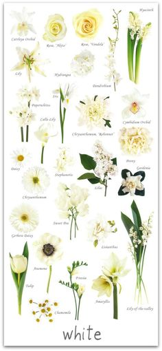 White Wedding Flower Guide #flowers