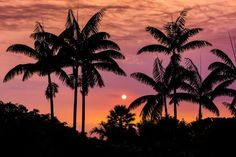 Sunset through silhouetted palm trees, Kona Coast, The Big Island, Hawaii USA / © Russ Bishop ~ Click image to purchase a print or license Tree Wallpaper Iphone, Sunset Wallpaper, Laptop Wallpaper, Palm Tree Sunset, Palm Trees, Big Island, Island Life, Palm Background, Panama