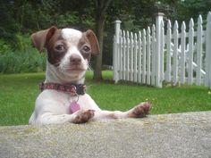 Dog #fence problems