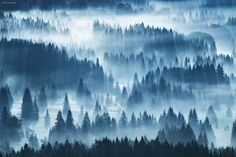 Bathed in Light by Kilian Schönberger on By Kilian, Halloween Window, Animal Magic, Magical Forest, Boho Girl, Travel Abroad, Hd Wallpaper, Wallpapers, Mists