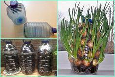 Barnul, sárgul, szárad a tujád? Garden Plants, Glass Vase, Urban Gardening, Home Decor, Decoration Home, Room Decor, Apartment Gardening, Interior Decorating, Urban Homesteading
