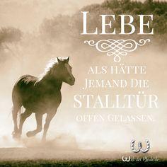 sprüche über pferde Die 171 besten Bilder von Pferde Zitate | Horse quotes, Horseback  sprüche über pferde