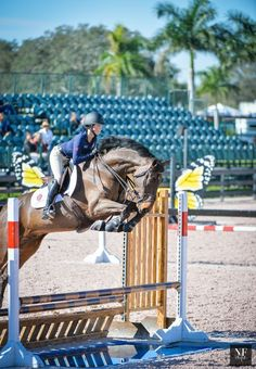 The most important role of equestrian clothing is for security Although horses can be trained they can be unforeseeable when provoked. Riders are susceptible while riding and handling horses, espec… Equestrian Outfits, Equestrian Style, Dressage, Types Of Horses, English Riding, Show Jumping, Horseback Riding, Horse Riding, Beautiful Horses