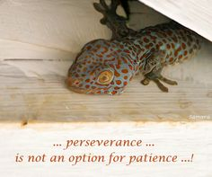... #perseverance ... is not an option for #patience ...!