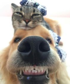 Funny dogs and cats friendship 49 Ideas Cute Little Animals, Cute Funny Animals, Funny Dogs, Cute Cats, Dog Pictures, Animal Pictures, Cute Animal Photos, Cute Dogs And Puppies, Doggies