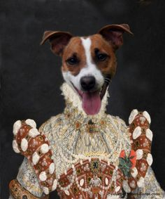 Queen Jack Russell is not shy when it comes to telling the bigger dogs she's the reigning leader #jackrussell Gallery | yourpetinuniform.com