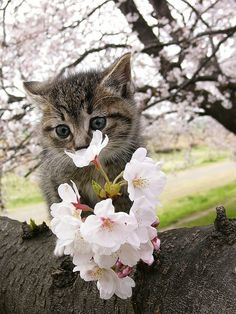 cybergata:  Spring 1 by chiro5206 on Flickr.