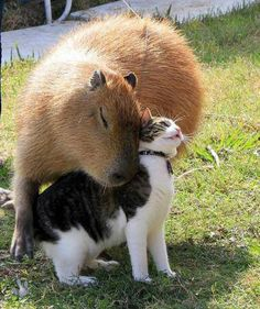 so cute!!! #cat #friendship
