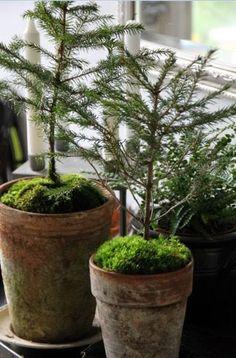 Små granar pryder.... | Godastunder & Tokiga Ideèr | Bloglovin