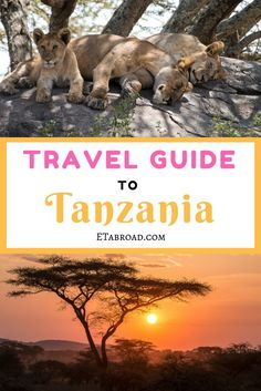 Going on safari to Africa? Take advantage of our experience of visiting the Serengeti and other national parks in Tanzania.