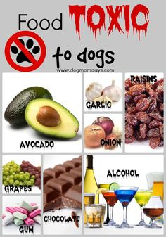 Food toxic to dogs!