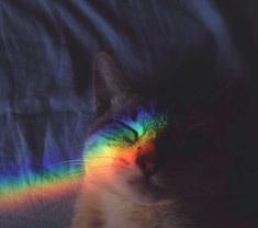 Discovered by Mellervi. Find images and videos about cat, colors and rainbow on We Heart It - the app to get lost in what you love.