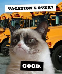 Grumpy Cat photo with meme #GrumpyCat #Meme....I am sorry Grumpy but this time I don't agree with you at all :-(